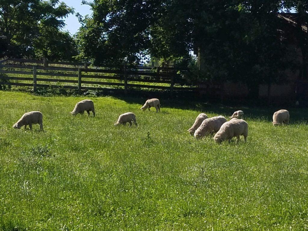Budding Creek Farm