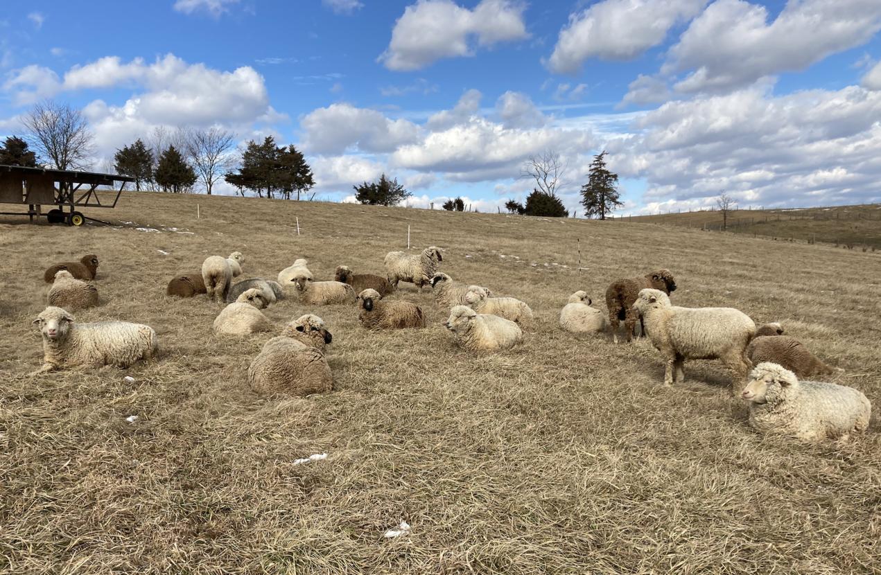 Simple Hill Farm winter